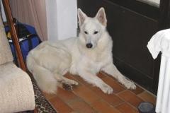 2003-02-28 Feuerschwendt 039